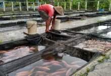 Photo of Bagaimana Zakat Ikan dalam Tambak?