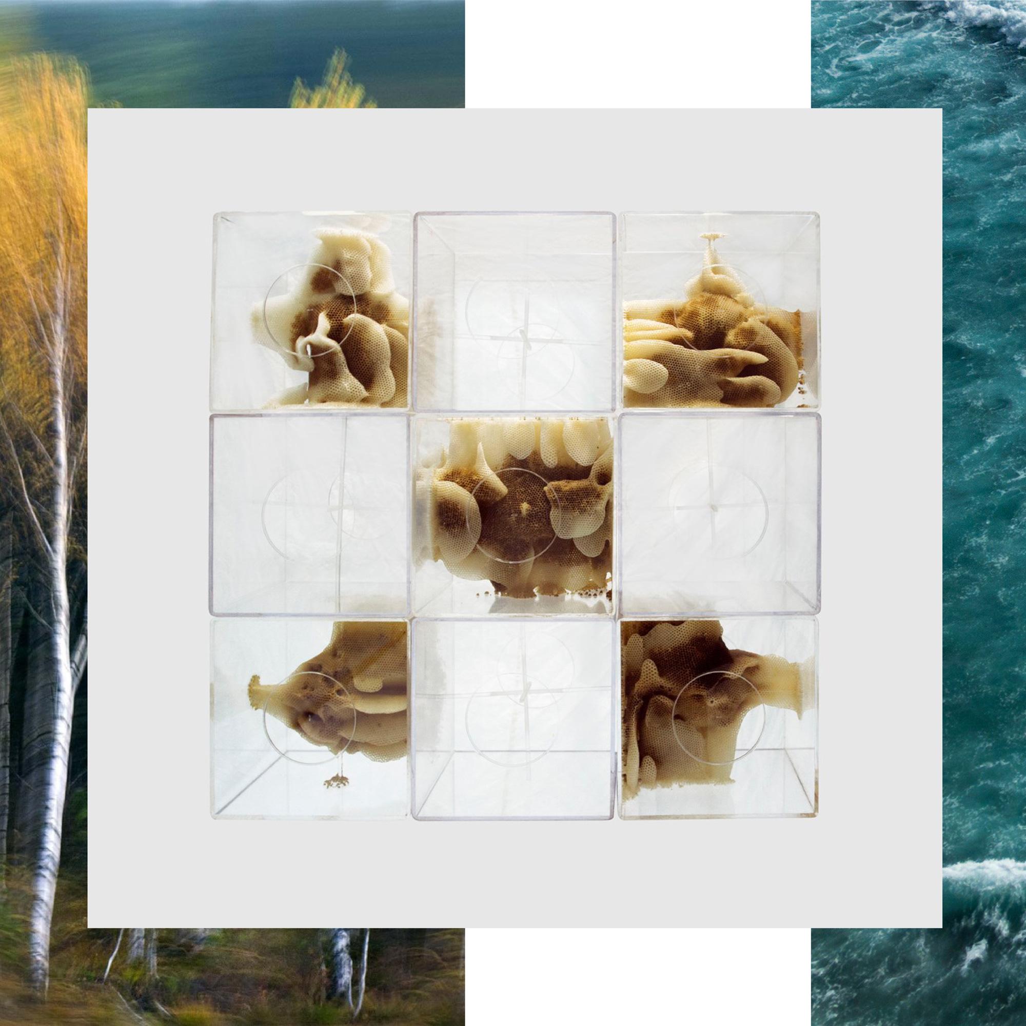 Nature Art Technology