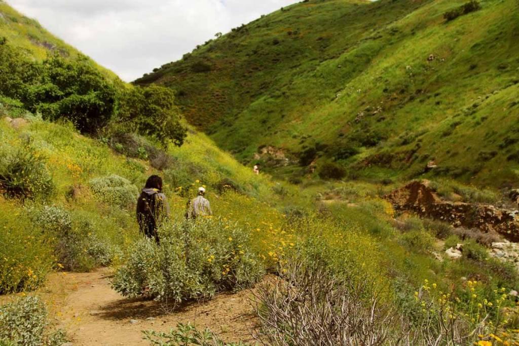 Walker Canyon superbloom hidden california