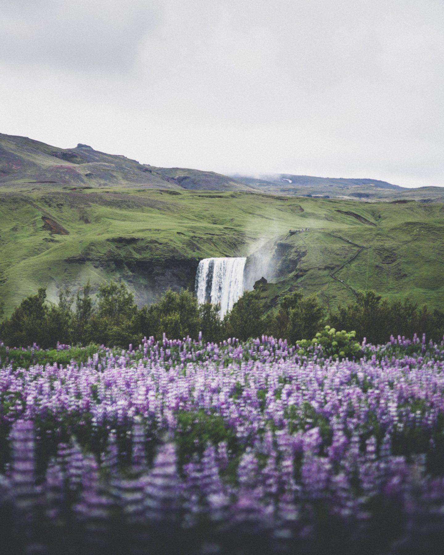 Skógafoss in Summer | Hidden Iceland | Photo by Norris Niman