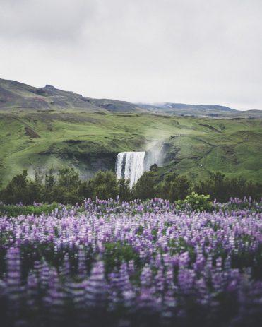 Skogafoss in Summer | Hidden Iceland