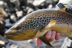 Mountain Fishing Trout | Fly Fishing Tour | Hidden Iceland