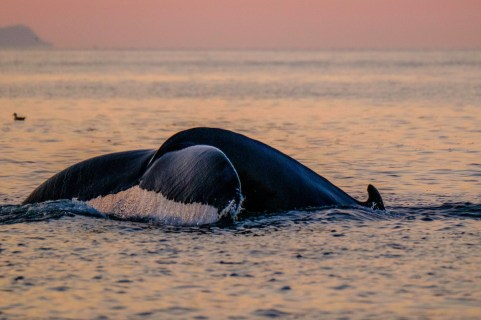 Whale and Puffin tour | Hidden Iceland | Feature