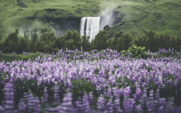Skógafoss | South Coast Fire & Ice tour | Hidden Iceland | Photo by Norris Niman * Feature