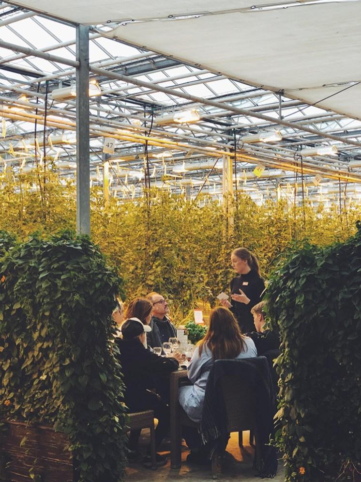 Friðheimar Tomato Greenhouse   Golden Circle: Platinum Tour   Hidden Iceland   Photo by Dagný Björg Stefánsdóttir