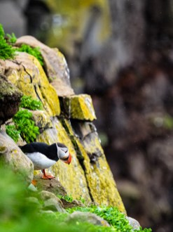 Puffin spotting by Mark Hoey.