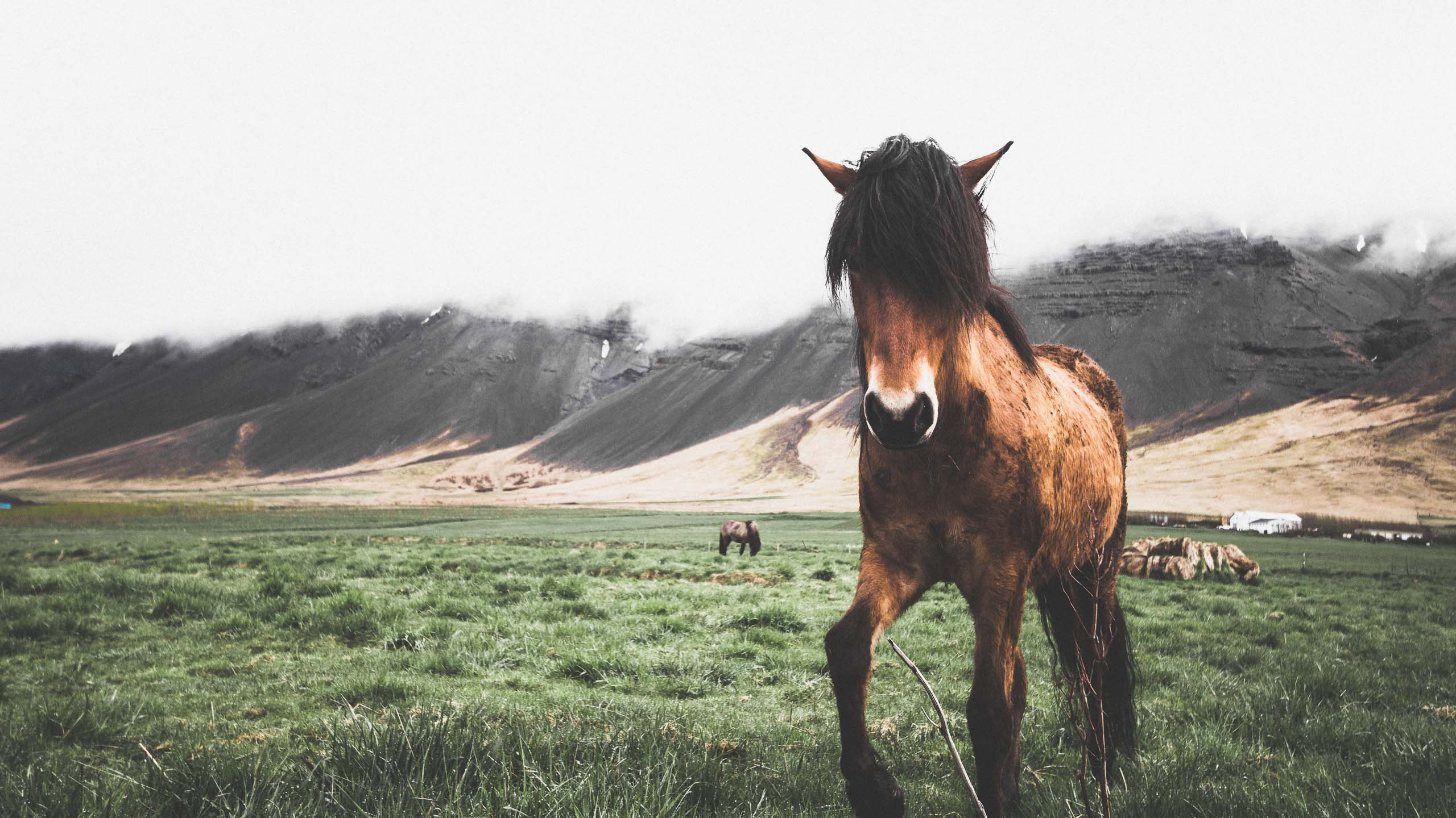 The Icelandic Horse | Hidden Iceland | Photo by Norris Niman | Feature