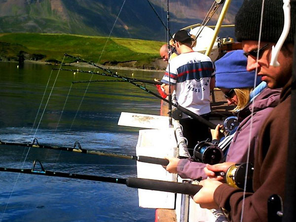 Hauganes Whale Watching | Carbon Neutral Tours | Hidden Iceland