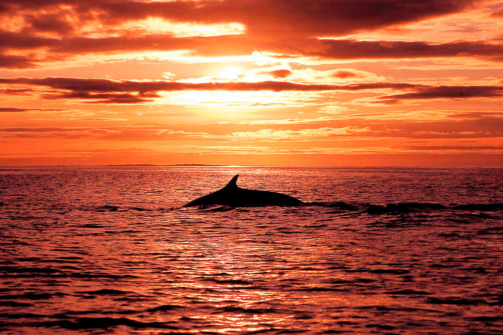 Whale Watching Midnight Sun | Hidden Iceland | Photo North Sailing