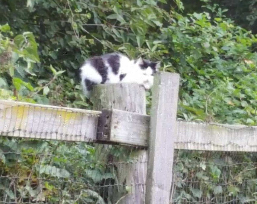 A cat sits on a fence post
