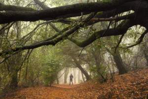 Hike Doane Valley, one of Palomar Mountain's most stunning areas, filled with thick trees, fog and wildlife