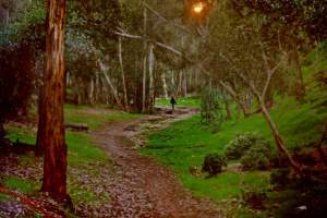 Hike in the woods at Hoyt Park. This is one of Scripps Ranch's many forested trails, shading you with eucalyptus trees.