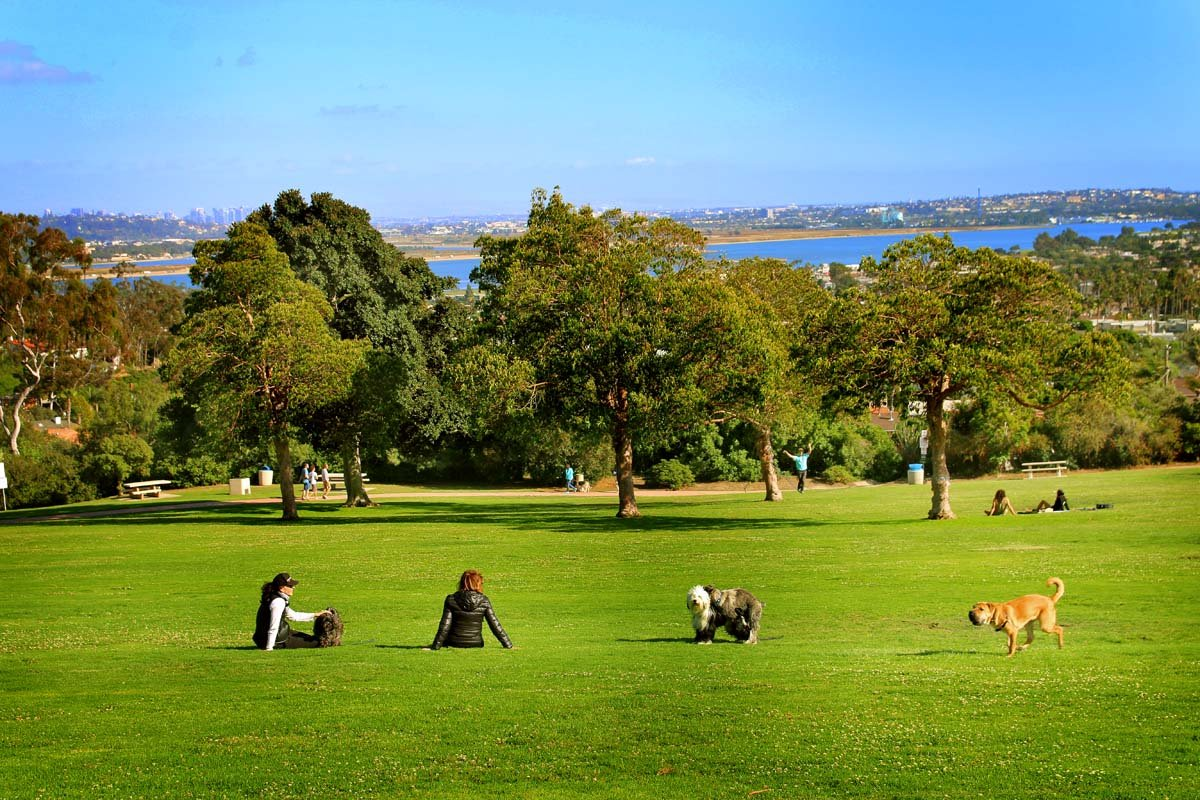 Get one of the best views in Pacific Beach from Kate Sessions Park!