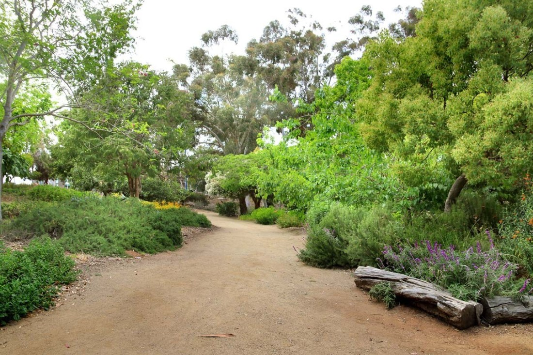 Balboa Park has one hidden area that may be healthier than the rest: Trees For Health. Educate yourself on medicinal trees while taking a nature stroll.