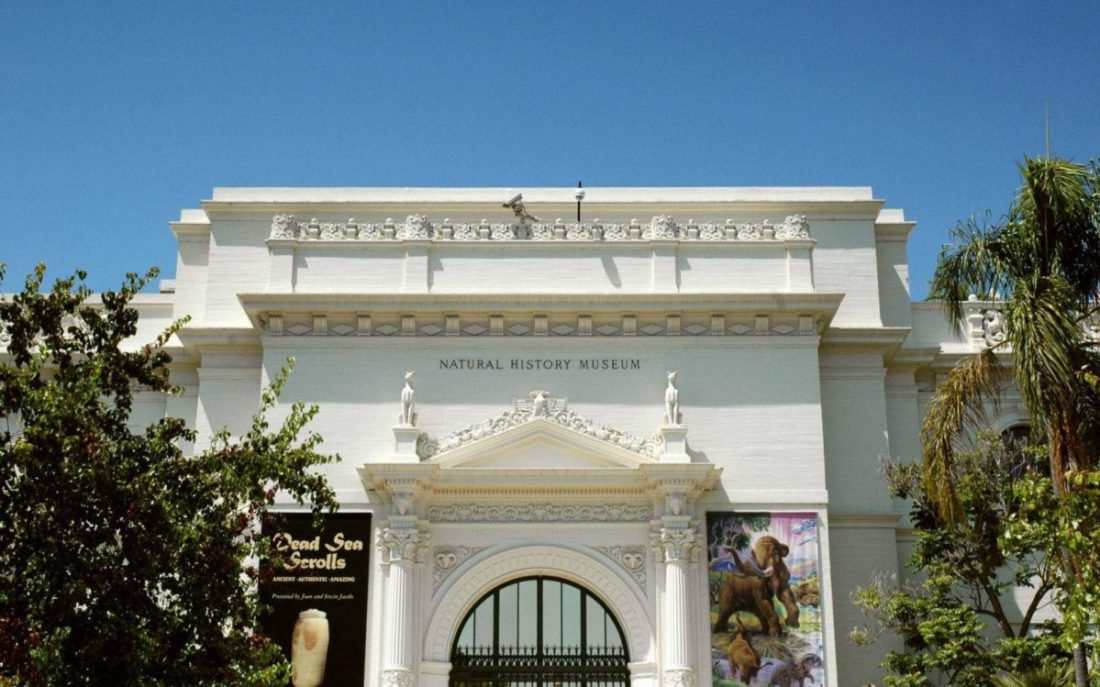Visit the world-famous Natural History Museum in Balboa Park!