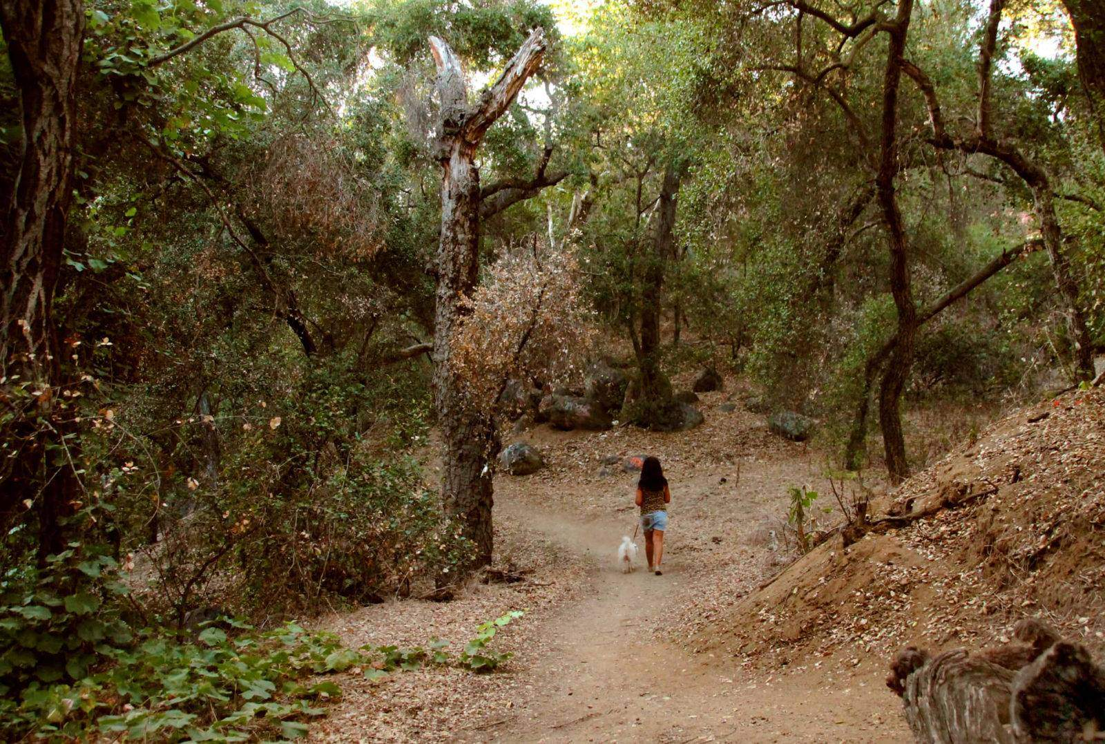 Hike one of Escondido's beautiful and historical forested trails in Kit Carson Park