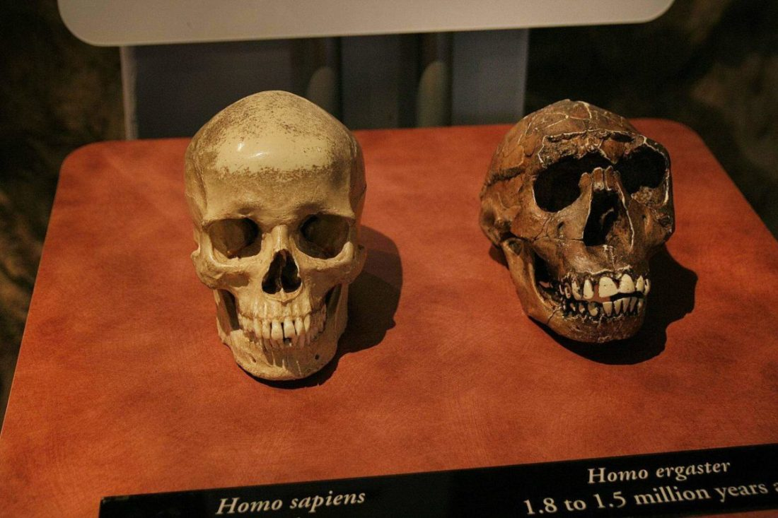 The Museum of Man in Balboa Park is one of San Diego's oldest and most prestigous museums. Free to San Diego residents the 3rd Tuesday every month.
