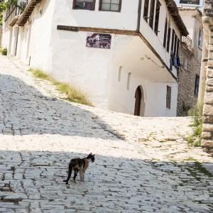 Katze in Berat Albanien