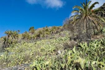 Landschaft mit Palmen und Kaktus