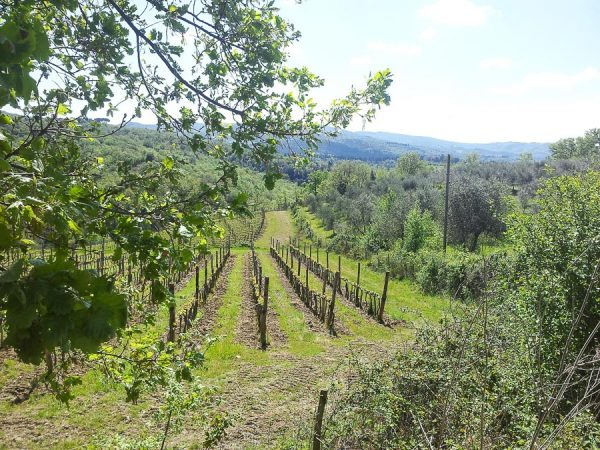 Weinberge im Chianti in der Toskana
