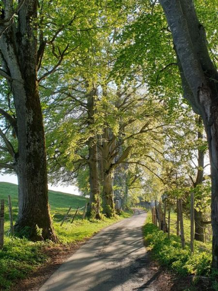 Malerischer Spazierweg am Asberg