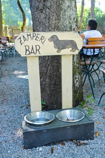 Drinking Spot for Dogs