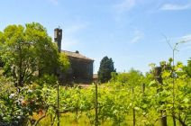 Grapes on Torcello