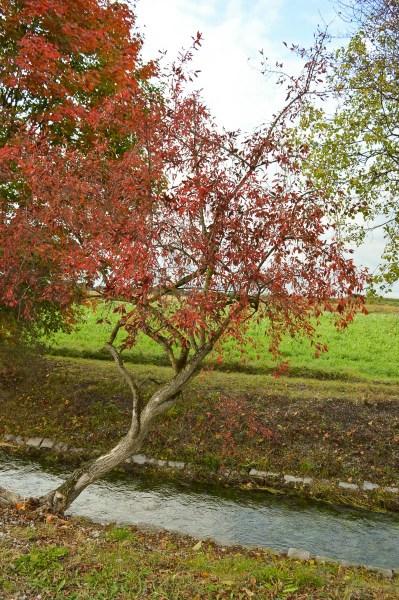 Autumn at Hüllgraben Munich