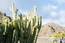Cactus La Gomera