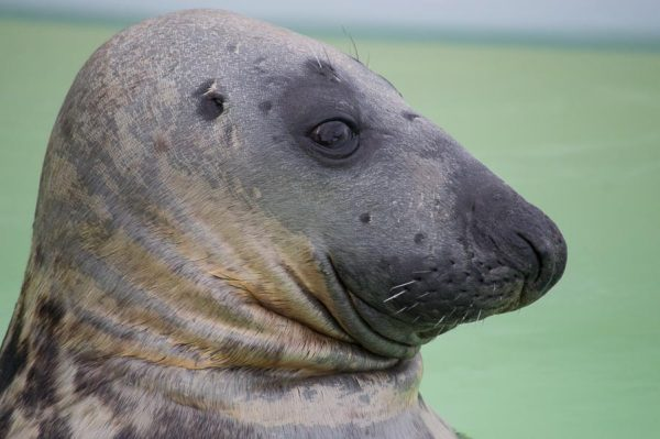 Seal on Texel