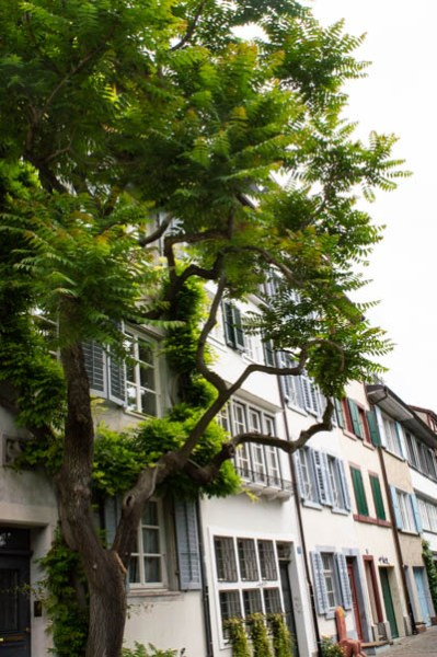 House and tree in Kleinbasel