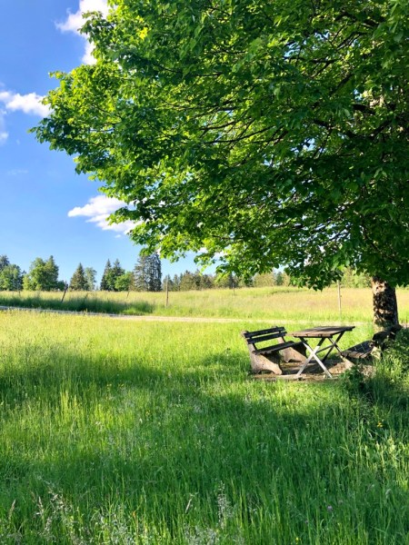 Picnic bench in the middle of beautiful nature