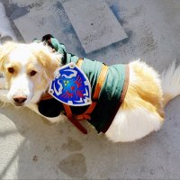 Prettify Your Pooch with This Link-Inspired Dog Costume