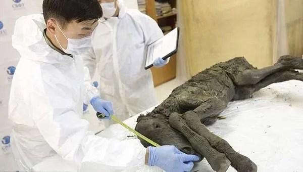 Учени от Русия и Корея ще клонират кон, починал преди 42 хиляди години