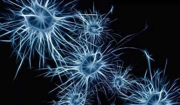"""Учени """"съживиха"""" мозъци на починали животни, с уникална система, наречена BrainEx"""