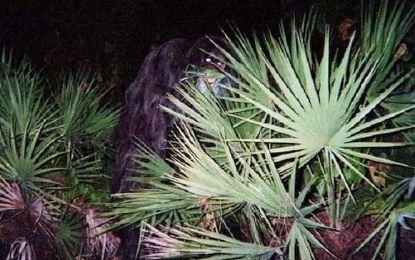 Най-обсъжданите снимки и видео на мистериозни животни