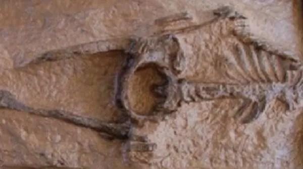 Скелет от съвременен тип, датиран на възраст 28 милиона години!?