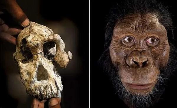 Антрополози са открили черепа на най-стария пряк човешки прародител
