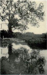 indian pond 1