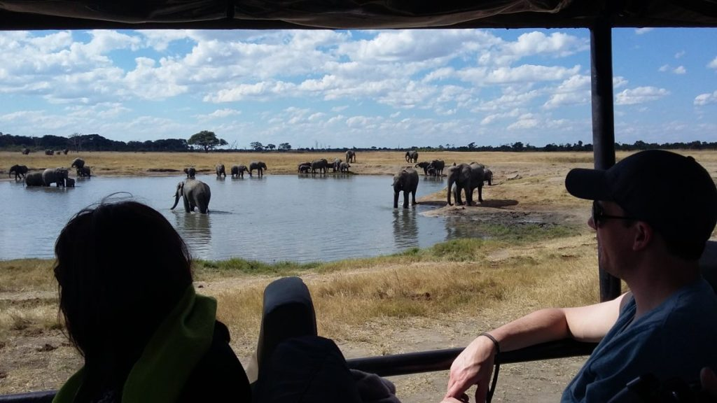 Game Viewing at Elephant's Eye Continues to Impress