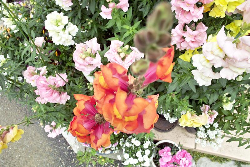 floweris9s