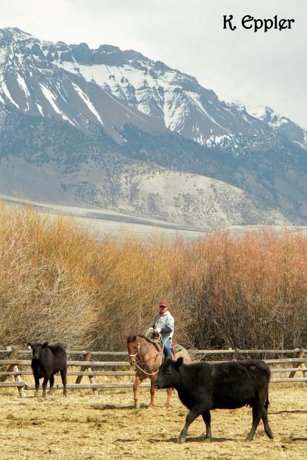 On the ranch in Idaho, Spring 2012.