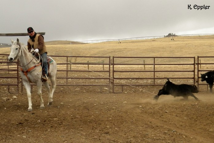 Bill and Blue in the branding pen, Spring 2013.