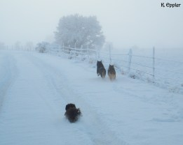 The dogs, heading out with me to feed in the morning.