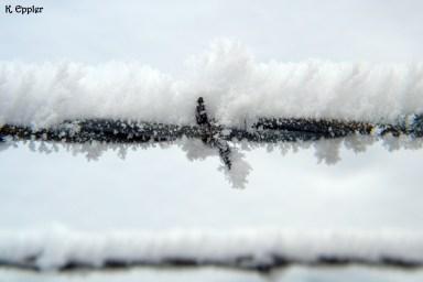 Frosty barb wire.