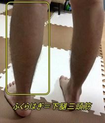 下腿三頭筋 視診