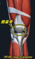 膝蓋骨 パテラ