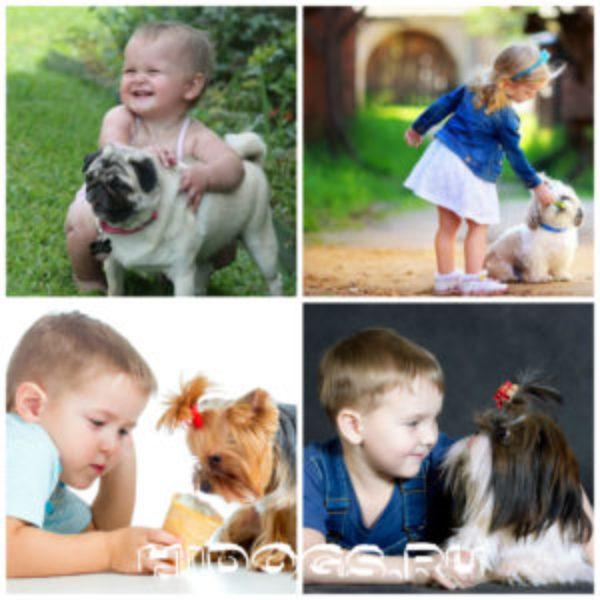 маленькие собаки с детьми