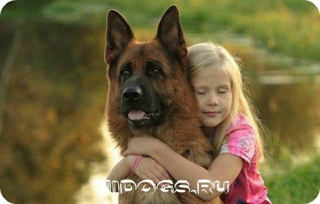 Немецкая овчарка в семье, взаимодействие с детьми, как воспитать с ребенком, отношение к малышам.