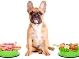 Чем кормить французского бульдога: правила питания
